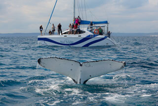 Blue Dolphin Marine Tours