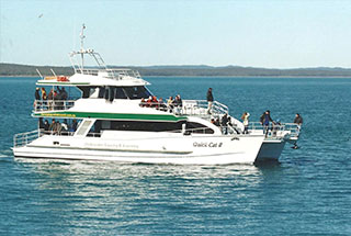 Hervey Bay Whale Watch